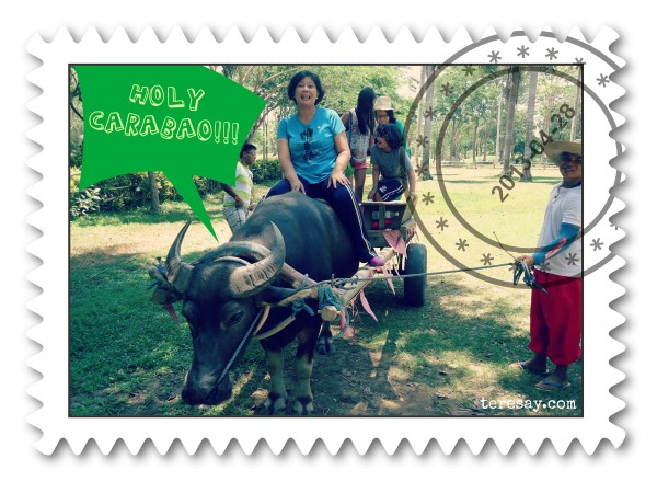 Teresay at Holy Carabao Holistic Farm