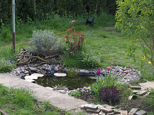 Tips For Maintaining A Clean Pond Teresay
