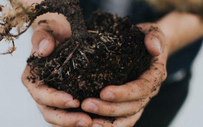 3 Ways To Create A Garden Your Children Will Enjoy